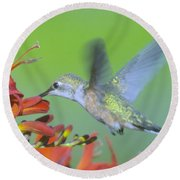 The Humming Bird Sips  Round Beach Towel by Jeff Swan