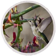 The Hummingbird And The Slipper Plant  Round Beach Towel