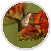 The Hummingbird Turns   Round Beach Towel