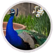 The Indian Peafowl Round Beach Towel