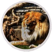 The King Lazy Boy At The Buffalo Zoo Round Beach Towel