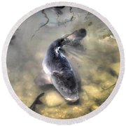 The King Of The Pond Round Beach Towel