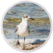 The Laughing Gull Strut Round Beach Towel
