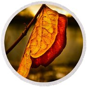 The Leaf Across The River Round Beach Towel