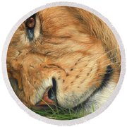 The Lion Sleeps Round Beach Towel by David Stribbling