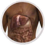 The Liver And Digestive System Round Beach Towel