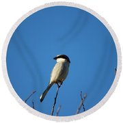 The Predator Lookout Shrike Bird Art Round Beach Towel