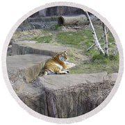The Lounging Tiger 1 Round Beach Towel