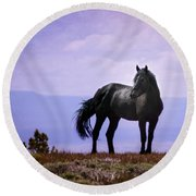 The Majestic Stallion Round Beach Towel