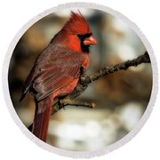 The Male Northern Cardinal Round Beach Towel