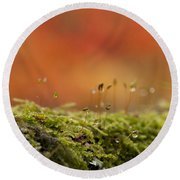 The Miniature World Of Moss  Round Beach Towel by Anne Gilbert
