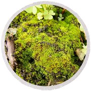 The Miniature World Of The Moss Round Beach Towel