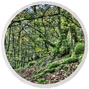The Mossy Creatures Of The  Old Beech Forest 5 Round Beach Towel