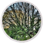 The Mossy Creatures Of The  Old Beech Forest 8 Round Beach Towel
