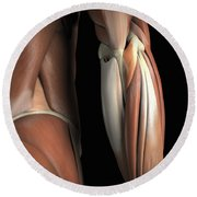 The Muscles Of The Elbow Rear Round Beach Towel