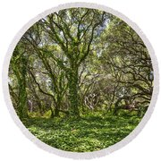 The Mysterious Forest - The Magical Trees Of The Los Osos Oak Reserve. Round Beach Towel