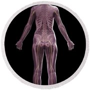 The Nervous And Skeletal Systems Female Round Beach Towel