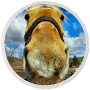 The Nose Knows Round Beach Towel