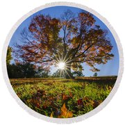 The Old Maple Round Beach Towel