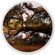 The Old Tree At The Ashley River In Charleston Round Beach Towel by Susanne Van Hulst