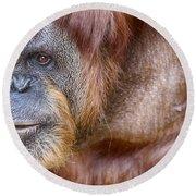 The Orangutan Album  Round Beach Towel