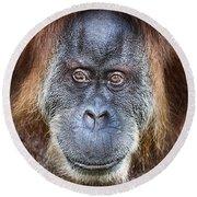 The Orangutan Album V4 Round Beach Towel