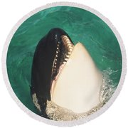 The Original Shamu Orca Whale At Sea World San Diego California 1967 Round Beach Towel