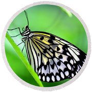 The Paper Kite Or Rice Paper Or Large Tree Nymph Butterfly Also Known As Idea Leuconoe Round Beach Towel