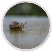 The Peeping Snail  Round Beach Towel