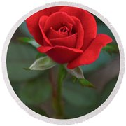 The Perfect Rose Round Beach Towel