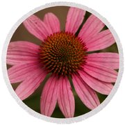 The Pink Daisy Round Beach Towel