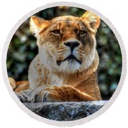 The Pondering Lioness Round Beach Towel