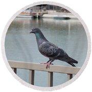 The Posing Pigeon Round Beach Towel