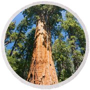 The President - Very Large And Old Sequoia Tree At Sequoia National Park. Round Beach Towel