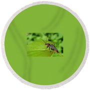 The Rednecked Bug- Close Up Round Beach Towel