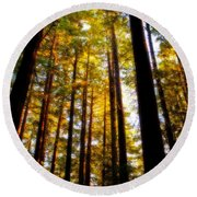 The Redwoods Of Florence Keller Park Round Beach Towel