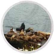 The Sea Lion And His Harem Round Beach Towel by Mary Machare
