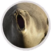 The Singing Seal Round Beach Towel