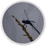 The Slaty Skimmer Round Beach Towel