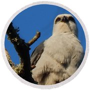 New Orleans  Southern Osprey Round Beach Towel