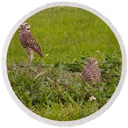 The Stares Of The Burrowing Owls Round Beach Towel