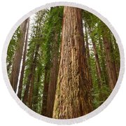 The Survivor - Massive Redwoods Sequoia Sempervirens In Redwoods National Park Named Stout Tree. Round Beach Towel