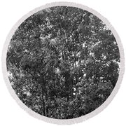 The Survivor Tree In Black And White Round Beach Towel