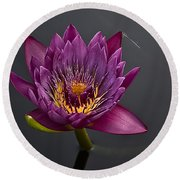 The Tiny Dragonfly On A Water Lily Round Beach Towel