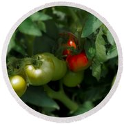 The Tomato Plant Round Beach Towel