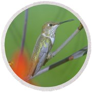 The Tongue Of A Humming Bird  Round Beach Towel by Jeff Swan