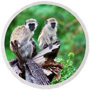 The Vervet Monkey. Lake Manyara. Tanzania. Africa Round Beach Towel