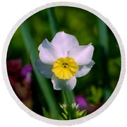 The White And Yellow Daffodil Round Beach Towel