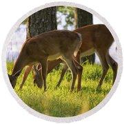 The Whitetail Deer Of Mt. Nebo - Arkansas Round Beach Towel