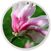 The Windblown Pink Magnolia 1 - Flora - Tree - Spring - Garden Round Beach Towel